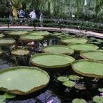 Kew Gardens – Last day in UK
