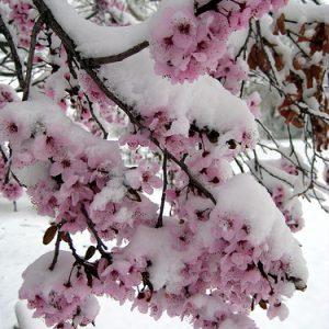 Winter or Spring?? Make up Your Mind…